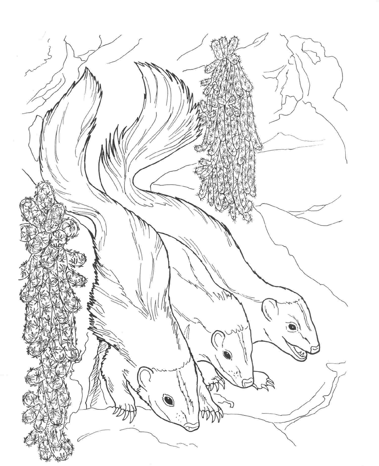 Free Coloring Pages Of Nocturnal Animals : Free coloring pages of animals at night